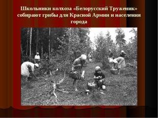 Школьники колхоза «Белорусский Труженик» собирают грибы для Красной Армии и н