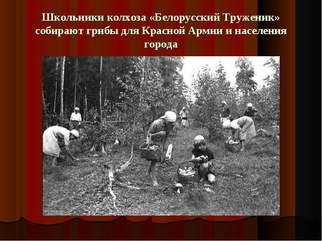 Школьники колхоза «Белорусский Труженик» собирают грибы для Красной Армии и н...
