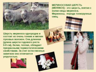 МЕРИНОСОВАЯ ШЕРСТЬ (MERINOS) - это шерсть, взятая с холки овцы мериноса. Мери