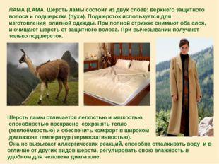 ЛАМА (LAMA. Шерсть ламы состоит из двух слоёв: верхнего защитного волоса и по