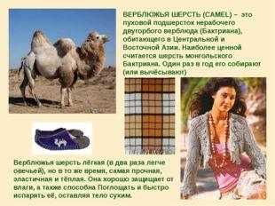 ВЕРБЛЮЖЬЯ ШЕРСТЬ (CAMEL) – это пуховой подшерсток нерабочего двугорбого верб