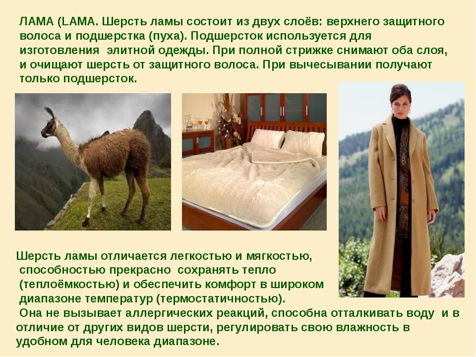 ЛАМА (LAMA. Шерсть ламы состоит из двух слоёв: верхнего защитного волоса и по...