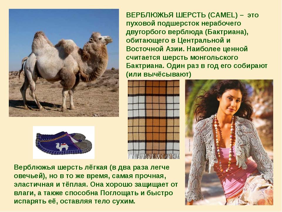 ВЕРБЛЮЖЬЯ ШЕРСТЬ (CAMEL) – это пуховой подшерсток нерабочего двугорбого верб...