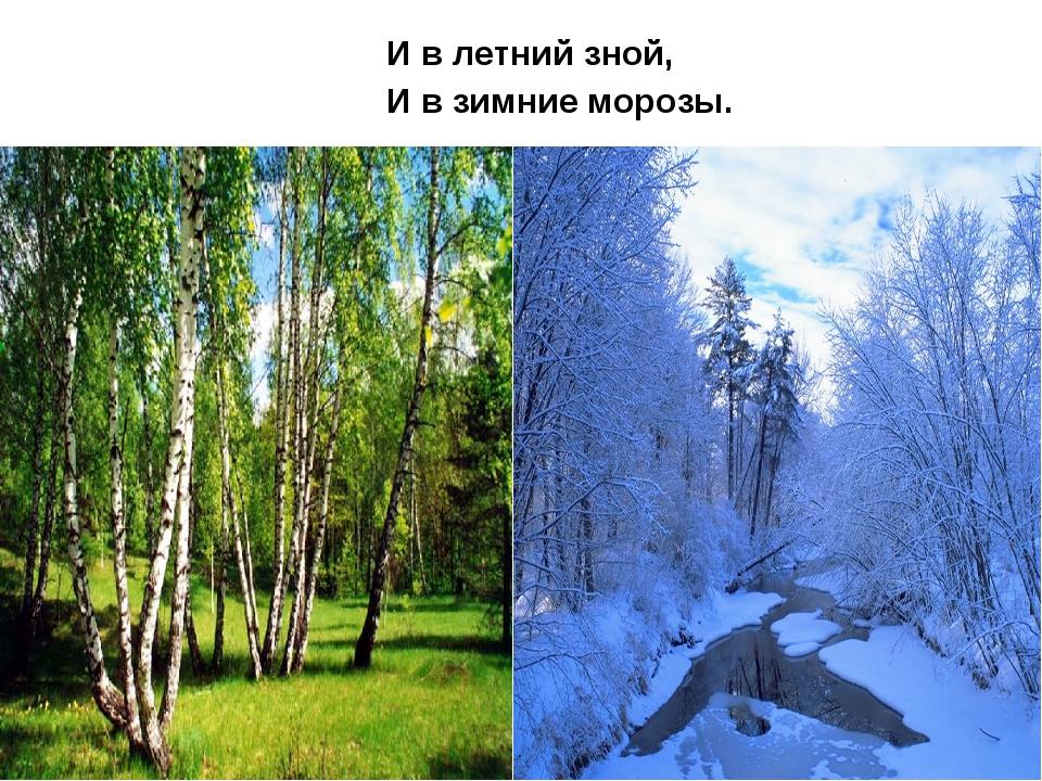 И в летний зной, И в зимние морозы.