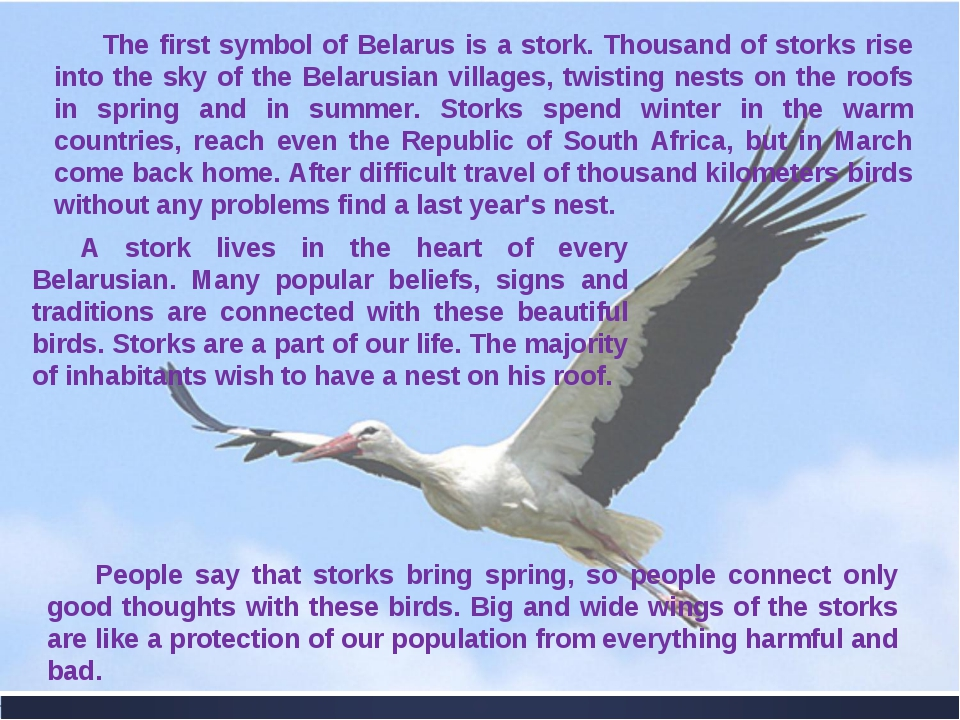 The first symbol of Belarus is a stork. Thousand of storks rise into the sky...