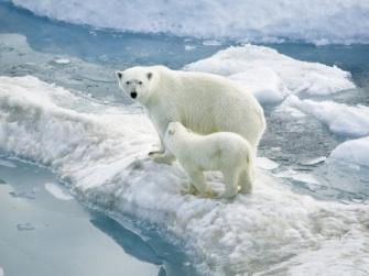 C:\Users\Mrs. OSYSHNAY\Desktop\курсы\занятие_6\Новая папка\polar-bear-2-450x337.jpg