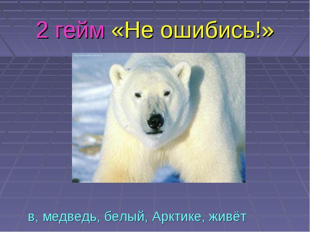 2 гейм «Не ошибись!» в, медведь, белый, Арктике, живёт