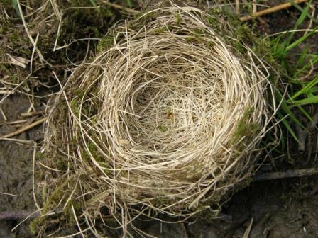http://maglucius.com/wp-content/uploads/2011/05/nest.jpg