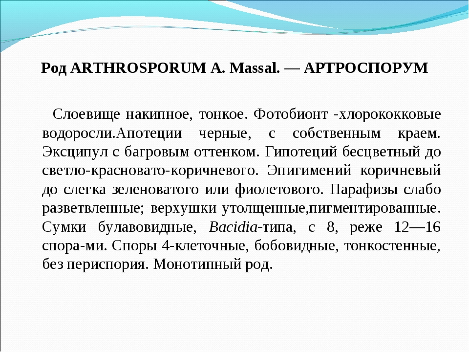 Род ARTHROSPORUM A. Massal. — АРТРОСПОРУМ Слоевище накипное, тонкое. Фотобион...