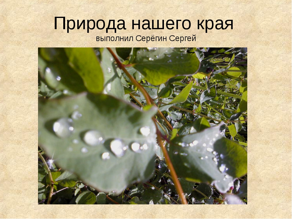 Природа нашего края выполнил Серёгин Сергей