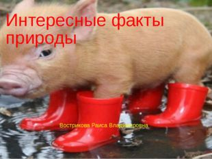 Интересные факты природы Вострикова Раиса Владимировна