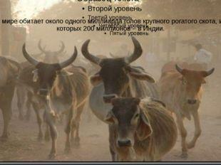 В мире обитает около одного миллиарда голов крупного рогатого скота, из котор