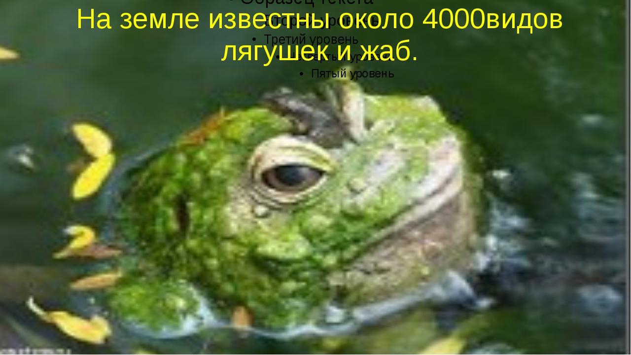 На земле известны около 4000видов лягушек и жаб.