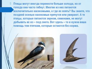 Птицы могут иногда перенести больше холода, но от голода они часто гибнут. Мн