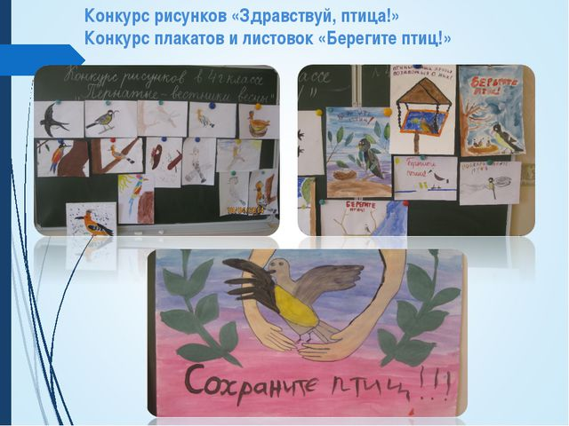 Конкурс рисунков «Здравствуй, птица!» Конкурс плакатов и листовок «Берегите п...
