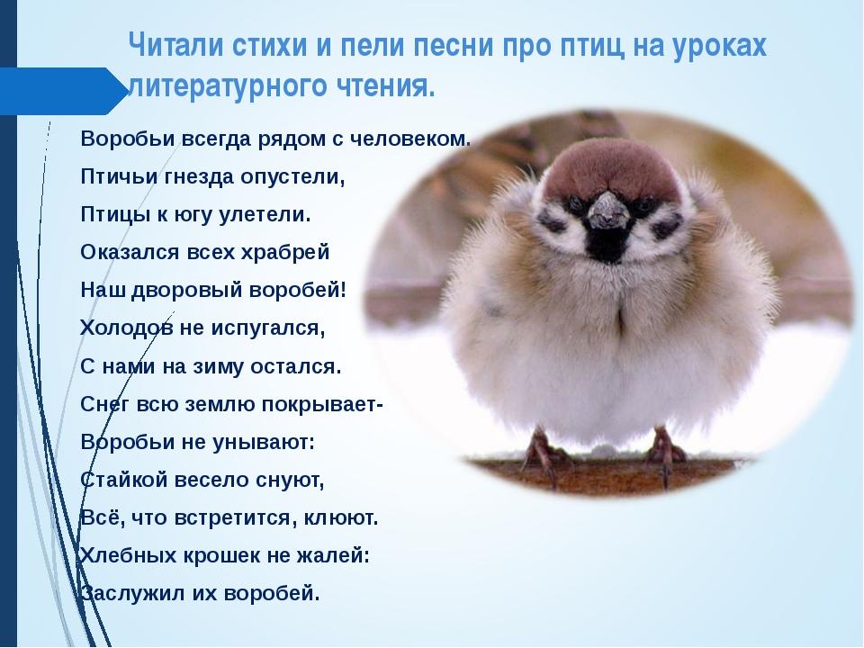Читали стихи и пели песни про птиц на уроках литературного чтения. Воробьи вс...