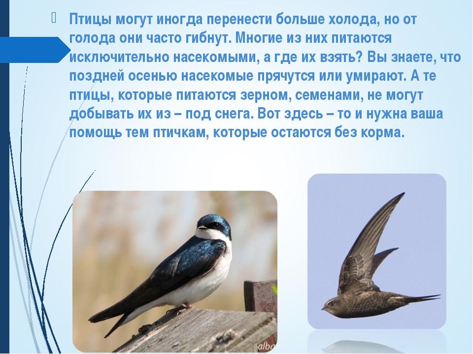 Птицы могут иногда перенести больше холода, но от голода они часто гибнут. Мн...