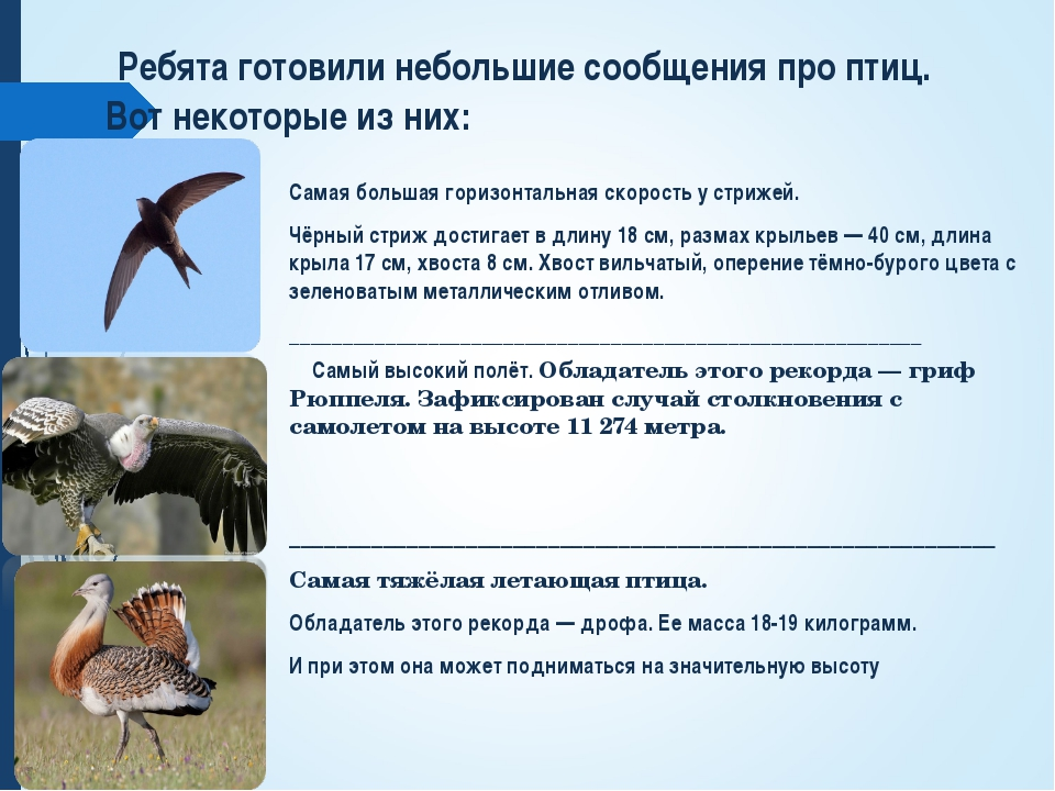 Ребята готовили небольшие сообщения про птиц. Вот некоторые из них: Самая бо...
