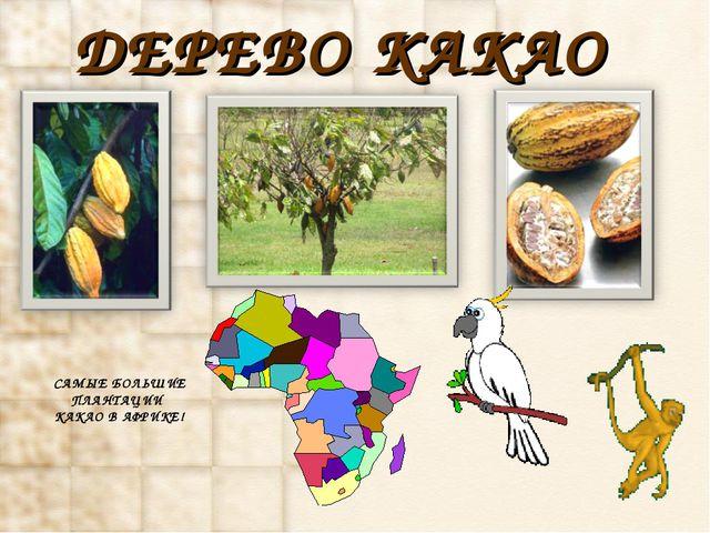 ДЕРЕВО КАКАО САМЫЕ БОЛЬШИЕ ПЛАНТАЦИИ КАКАО В АФРИКЕ! http://www.deti-66.ru/Де...