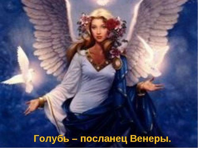 Голубь – посланец Венеры.