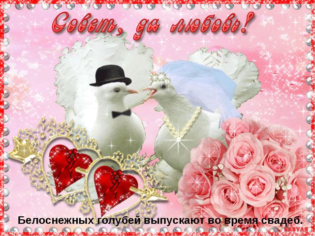 Белоснежных голубей выпускают во время свадеб.