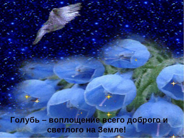 Голубь – воплощение всего доброго и светлого на Земле!