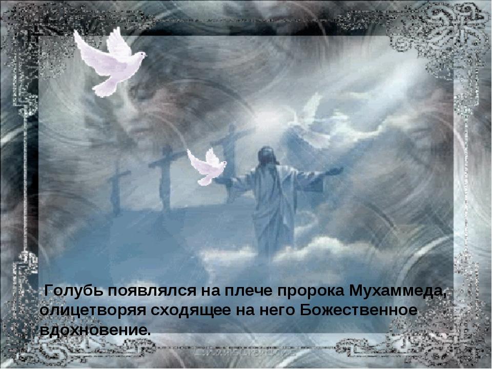 Голубь появлялся на плече пророка Мухаммеда, олицетворяя сходящее на него Бо...