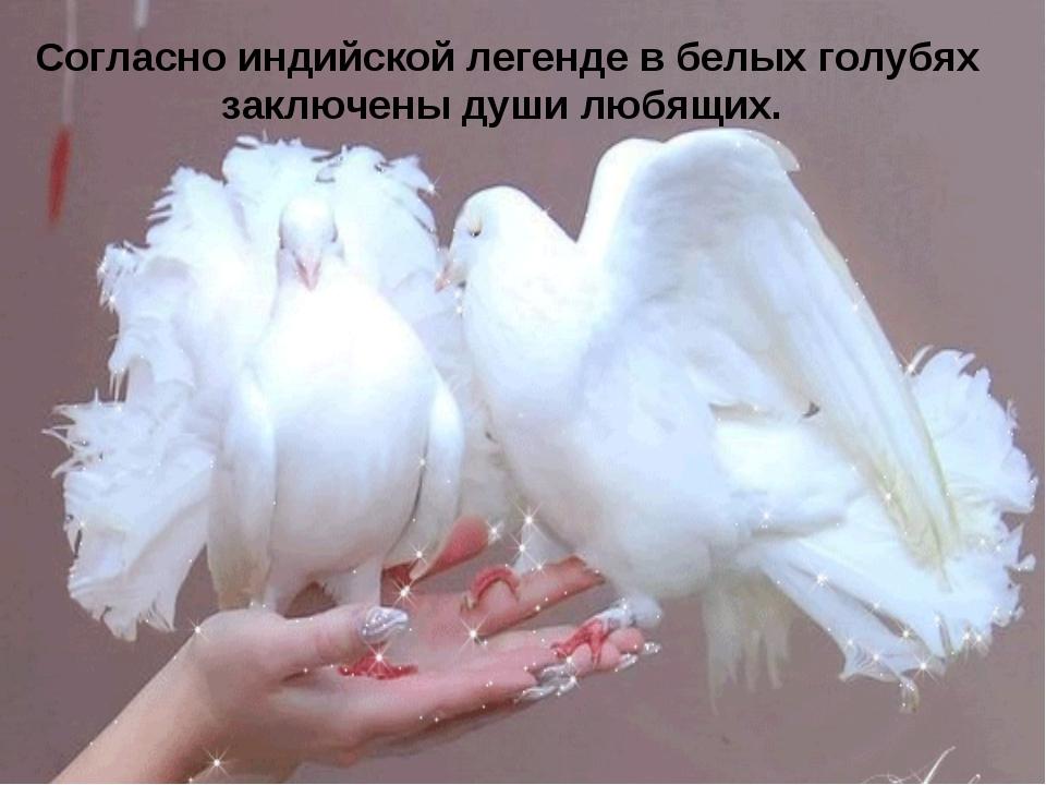 Согласно индийской легенде в белых голубях заключены души любящих.