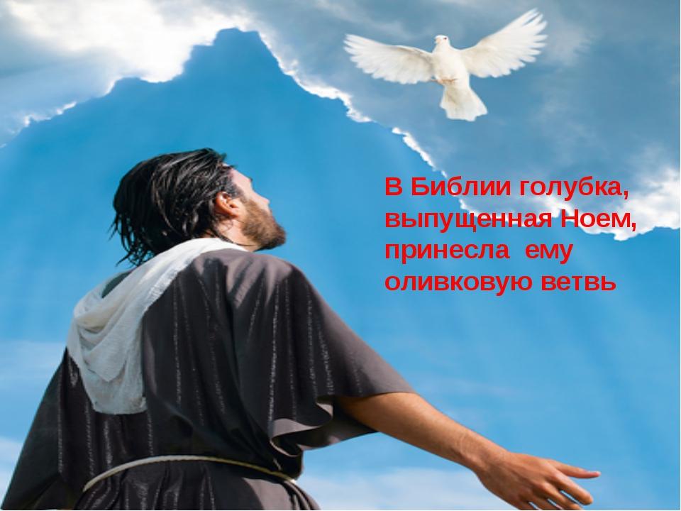 В Библии голубка, выпущенная Ноем, принесла ему оливковую ветвь