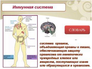 Имму́нная систе́ма – система органов, объединяющая органы и ткани, обеспечив