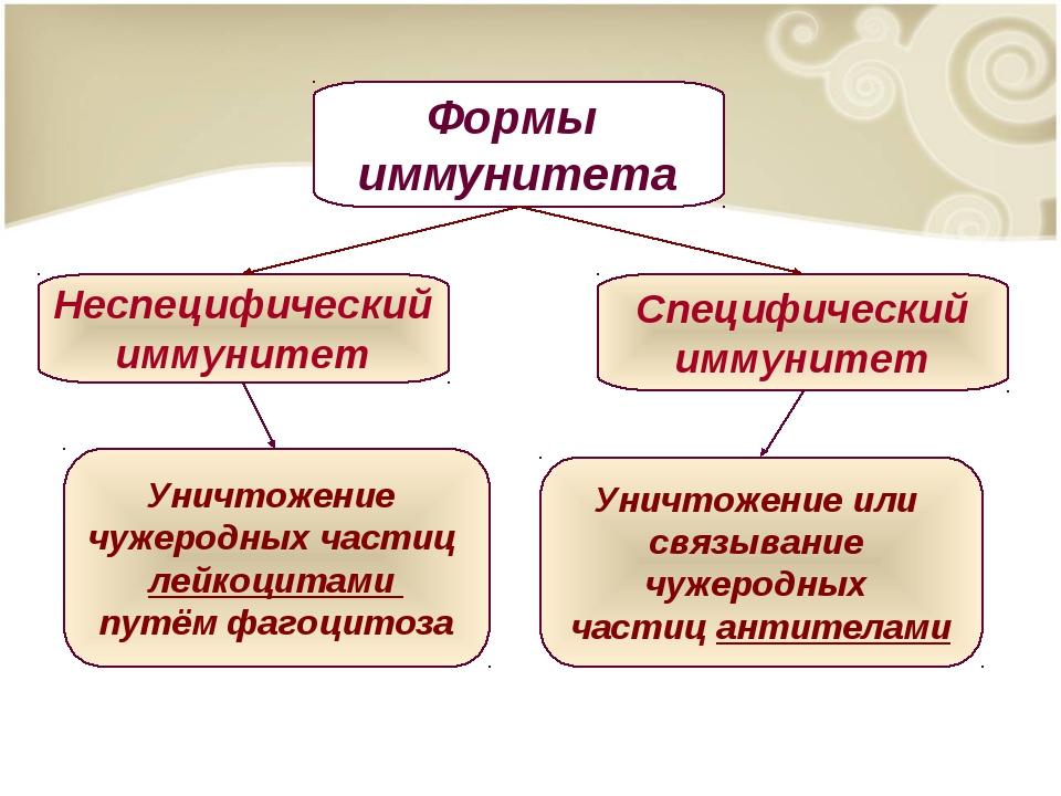 Уничтожение чужеродных частиц лейкоцитами путём фагоцитоза Уничтожение или св...