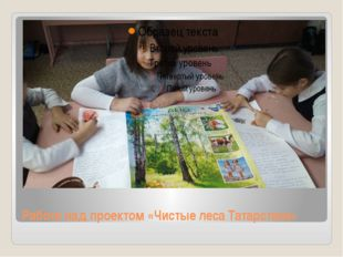 Работа над проектом «Чистые леса Татарстана»