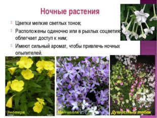 Ночные растения Цветки мелкие светлых тонов; Расположены одиночно или в рыхлы