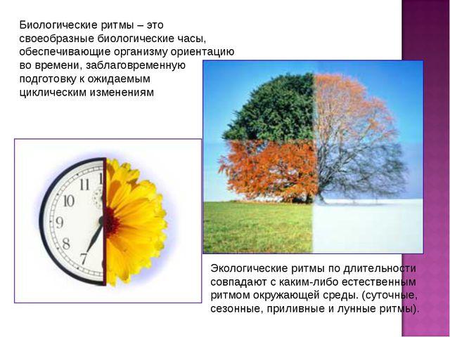 Биологические ритмы – это своеобразные биологические часы, обеспечивающие орг...