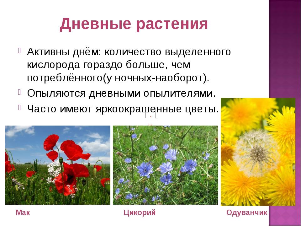 Дневные растения Активны днём: количество выделенного кислорода гораздо больш...