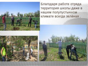 Благодаря работе отряда территория школы даже в нашем полупустынном климате в