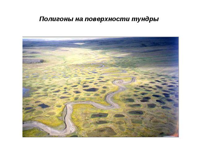 Полигоны на поверхности тундры