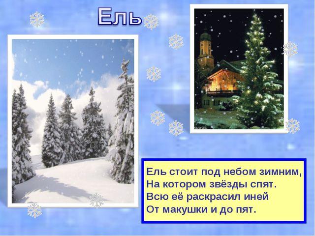 Ель стоит под небом зимним, На котором звёзды спят. Всю её раскрасил иней От...