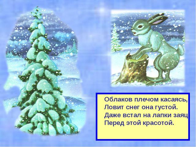 Облаков плечом касаясь, Ловит снег она густой. Даже встал на лапки заяц Перед...