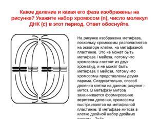 Какое деление и какая его фаза изображены на рисунке? Укажите набор хромосом