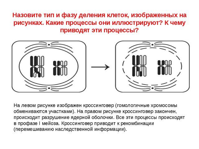 Назовите тип и фазу деления клеток, изображенных на рисунках. Какие процессы...