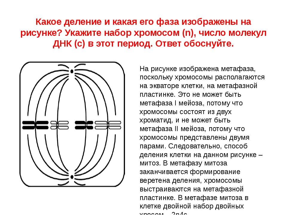 Какое деление и какая его фаза изображены на рисунке? Укажите набор хромосом...