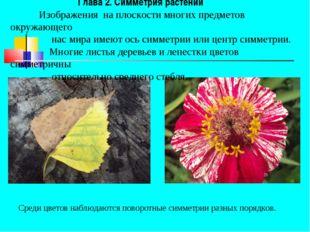 Глава 2. Симметрия растений Изображения на плоскости многих предметов окружа