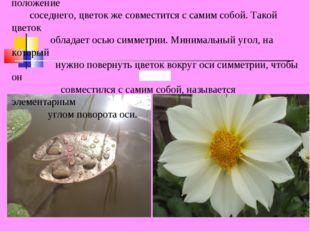 Многие цветы обладают характерным свойством: цветок можно повернуть так, что