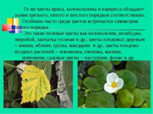 Те же цветы ириса, колокольчика и нарцисса обладают осями третьего, пятого и