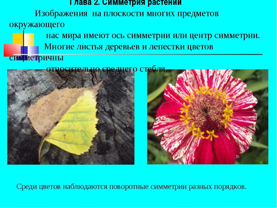 Глава 2. Симметрия растений Изображения на плоскости многих предметов окружа...