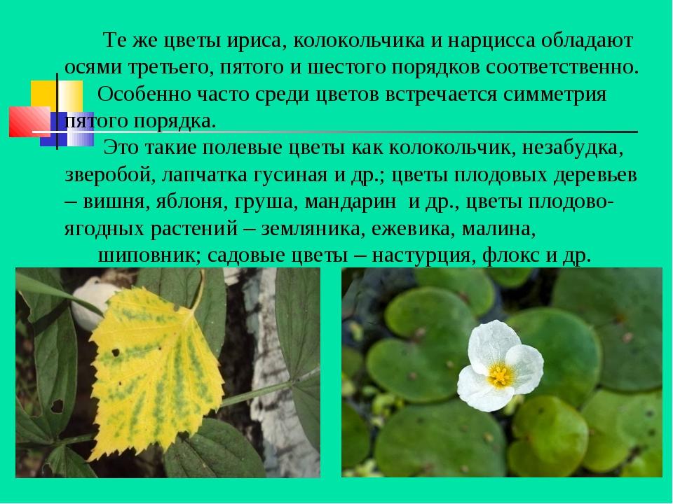 Те же цветы ириса, колокольчика и нарцисса обладают осями третьего, пятого и...