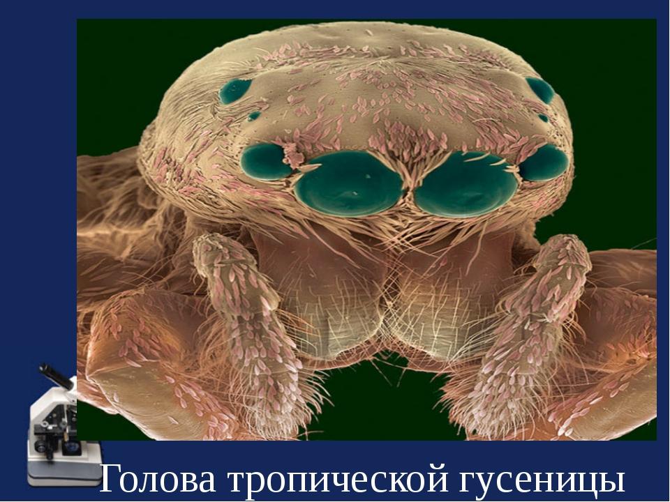 Голова тропической гусеницы