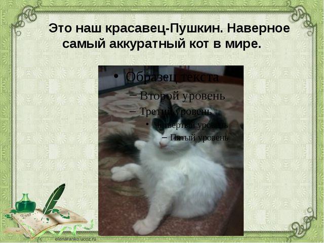 Это наш красавец-Пушкин. Наверное самый аккуратный кот в мире.