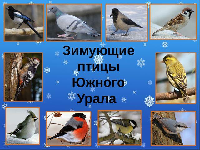 Зимующие птицы Южного Урала